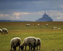 """Résultat de recherche d'images pour """"mont st michel moutons libre de droit"""""""