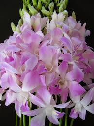 day orchid decor: mothers day orchid flowers mothersdayorchidflowers jpg mothers day orchid flowers