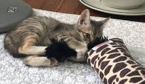 Why do Cats <b>Bunny</b> Kick? Is it Playful or Aggressive? Let's Find Out!