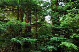 essay on conservation of forest   best custom written essays from    bing
