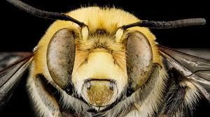 'How a bee <b>sting</b> saved <b>my</b> life' - BBC Future
