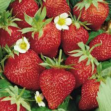 Φράουλα αγάπη μου.