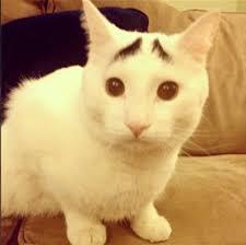 「ネコ」の画像検索結果