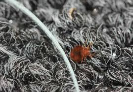 <b>Silica Gel</b>: A Better Bed <b>Bug Desiccant</b>