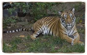 San Diego Zoo Celebrates    th Birthday Amid Global Debate Over