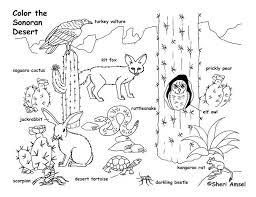 88 best arizona images on pinterest arizona, arizona travel and Nv Homes Remington Place Floor Plan desert animals coloring page nv homes remington place ii floor plan