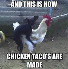 Animal Memes – Chicken tacos | Funny Memes | We Heart It via Relatably.com