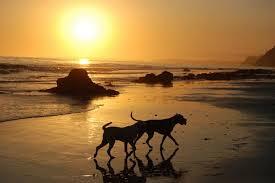 """""""Σου ροκανίζουν την καρδιά αδέσποτα σκυλιά""""..."""