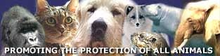 Image result for animal rights banners