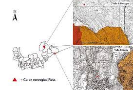 Carex norvegica Retz. in Valle di Gavia, una nuova stazione sulle ...