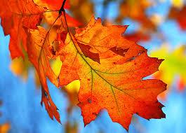 Znalezione obrazy dla zapytania jesienne liście