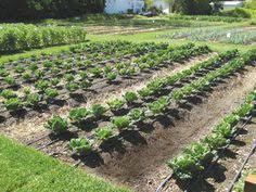 Small Picture Drip Irrigation Water Your Garden Efficiently Drip irrigation