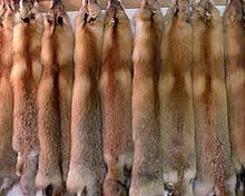 List of types of <b>fur</b> - Wikipedia