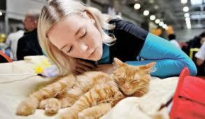 Уход за старыми животными: полезные советы от ветеринаров