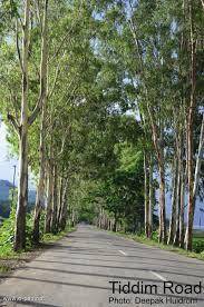 roadside tree plantation and its failure in imphal valley by nashik trees as seen in a tiddim road and b near kangla fort in the imphal city