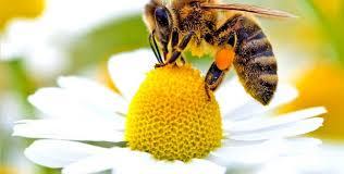 Резултат с изображение за край на зимата при пчелите