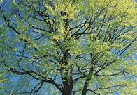Обрезка деревьев - OBI