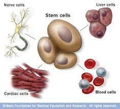 Image result for images for types of cells