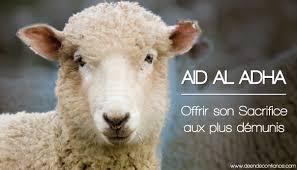 """Résultat de recherche d'images pour """"mouton aid adha 2016"""""""