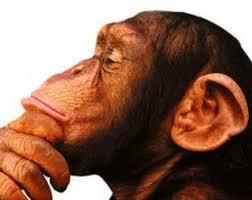 Resultado de imagen de mono y mona