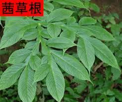 Qian Cao Gen tincture - CHT145