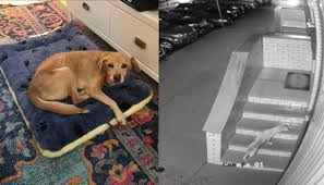 Couple Awakens to Find Random Malnourished Dog in <b>the Living</b> ...
