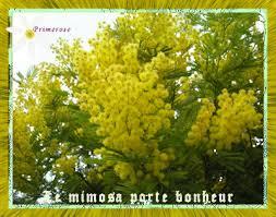 """Résultat de recherche d'images pour """"gifs   de fleurs de mimosa"""""""
