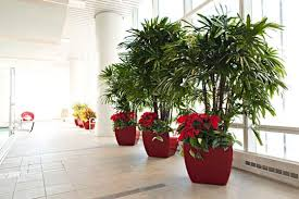 beautiful interior office plants from phillips cheap office plants