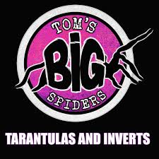 Tom's Big Spiders - Tarantulas and Inverts