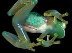 The 10 Weirdest and Most Unusual Frogs on Earth | Frogs Are Green