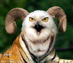 حيوانات غريبة images?q=tbn:ANd9GcQ
