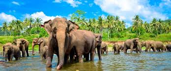 Image result for sri lanka