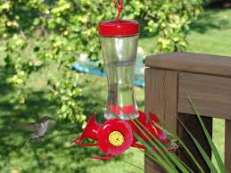 Frequently Asked Questions about Hummingbirds » Bird Watcher's ...