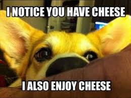 Image result for silly animals