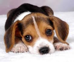 Image result for cute puppy pic