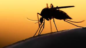 Resultado de imagen para zika virus