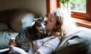 'Crazy <b>cat lady</b> syndrome': From medical myth to potential cancer ...