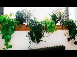 best indoor plants best indoor plants low light best low light office plants