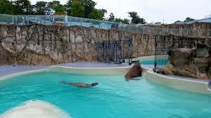 Résultats de recherche d'images pour «Aquarium de Québec»