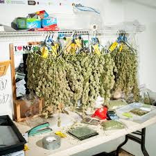 pot for the family travel leisure marijuana tourism