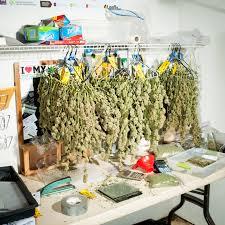 pot for the family travel leisure marijuana tourism