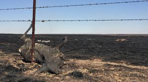Image result for animals died in fire