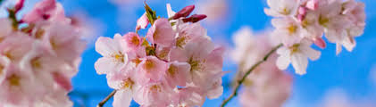 цветочные - Группа ароматов