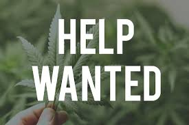 top cannabis jobs this week thcu insider every week the staff at cannabis jobs board handpicks their favorite three cannabis jobs that were posted this week the jobs are selected to show the many