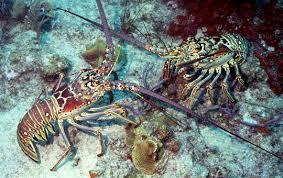 Výsledek obrázku pro brač underwater