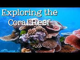<b>Coral Reef</b> | Anson Primary School