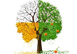 choisir un arbre