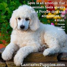 Standard Poodles-a breed to consider (if you are smart enough ... via Relatably.com