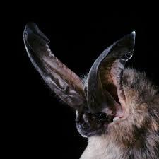 <b>Bats</b>, facts and photos