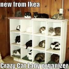 15 Best Cat Memes - LOLS.me via Relatably.com